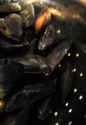 musselsblog.jpg